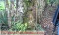 hermoso-terreno-en-el-boqueron-si-lo-vende-despues-ganancias-garantizadas-10000-4.jpg