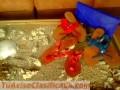 sandalias-de-cuero-en-todo-color-baratisimas-4599-3.jpg